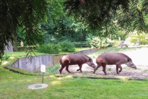Зоопарки Европы: Краков