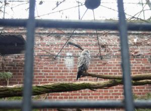 Зоопарки Европы: Вроцлав