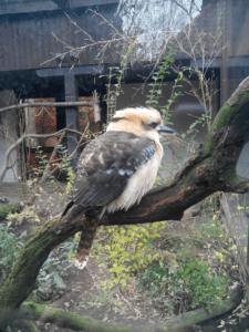 Зоопарки Европы: Будапешт